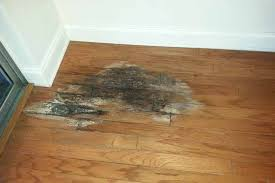 Delaying Plumbing Repairs Can BeCatastrophic