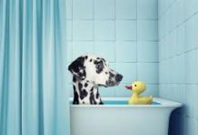 PETS AND PLUMBING